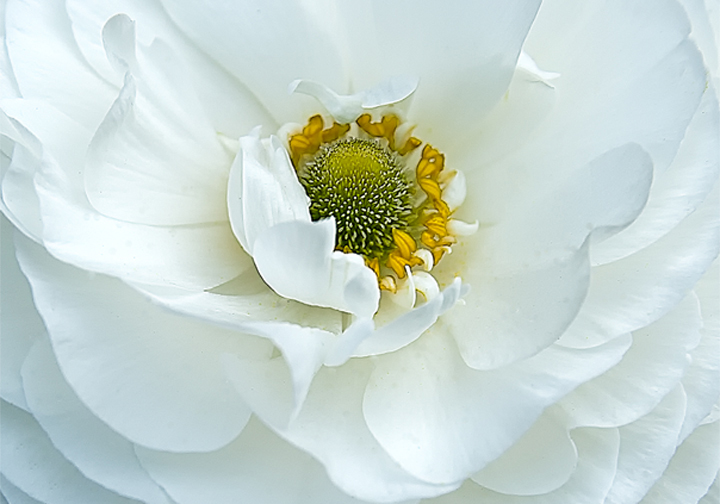 White Flower- Photography