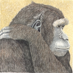 Chimp - Original Etching 5 x 5