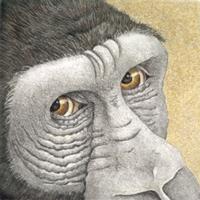 Gorilla - Original Etching 5 x 5