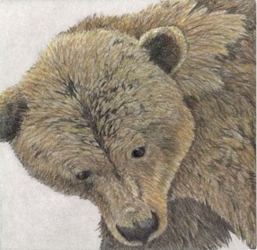 Grizzly - Original Etching 5 x 5