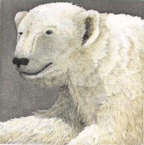 Polar Bear - Original Etching 5 x 5
