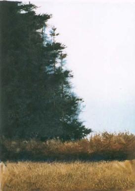 Hedgerow - Original Etching 5.5 x 7.5